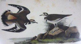 TEN AUDUBON BIRDS OF AMERICA OCTAVO LITHOGRAPHS