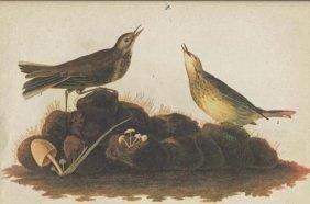 John James Audubon Circa 1946 AMERICAN PIPIT MATTED PR