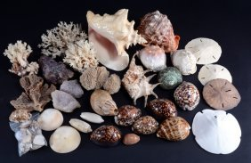 Collection Shells, Coral And Sand Dollars Plus