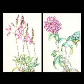 """Sally Robertson 2 Works """"Orchids"""" Watercolor"""