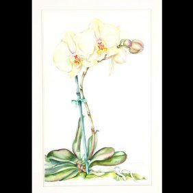 """Sally Robertson """"White Orchid"""" Watercolor"""