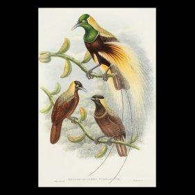 William Hart Bird Of Paradise  Lithograph