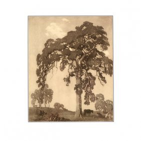 """Lionel Lindsay """"the Great Red Gum"""" Etching, Australian"""