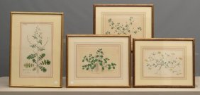 British Botanical Wildflower Hand Colored Prints