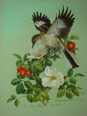 Pencil Signed/ Numbered ROGER T PETERSON Bird Prin