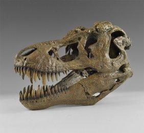 Natural History - Tyrannosaurus Rex Dinosaur Skull