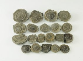 Natural History - Ammonite Fossil Group