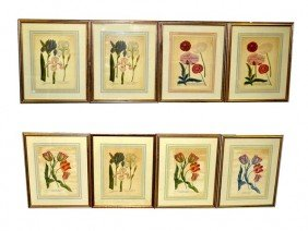 Group Of Eight Reproduced 18th C. Botanical Prints