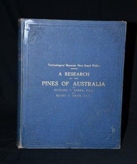 Pines Of Australia