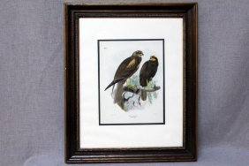 Marsh Harriers Stone Lithograph
