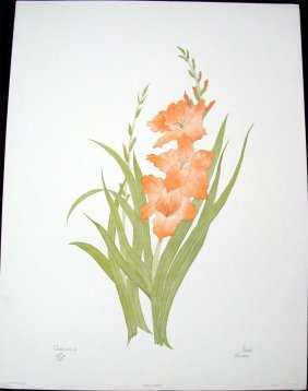 Gladiola By Moran Signed & Numbered #613/750
