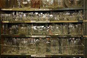 Shelf Of Assorted Clear Glass Vases, Crystal.