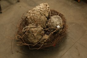 Assorted Wasps Nests And Birds Nest Group