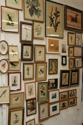 Grouping Of Botanical, Bird, And Other Assorted