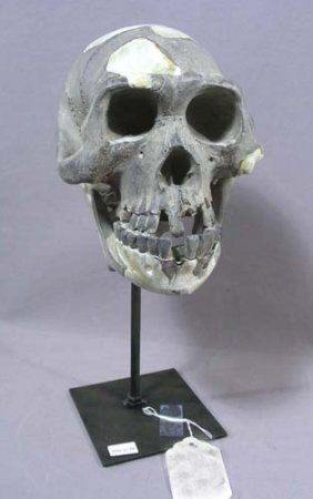 Composition Skull And Metal Stand