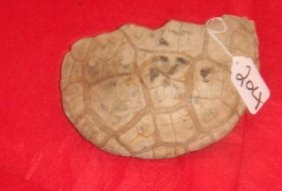 Large Fragment Of Pre-historic Fossil Turtle.