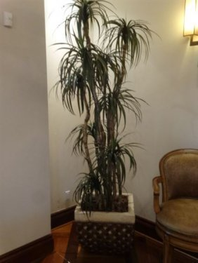 Large Faux Dracaena Tree With Wood Trunk, In Wicker