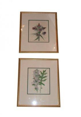 Pair Of 19th Century Botanicals.  Dimensions:  15.