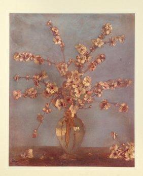 Allan Thomas Bernaldo The Glass Vase
