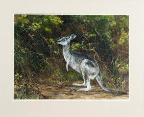 Marie Barr Kangaroo