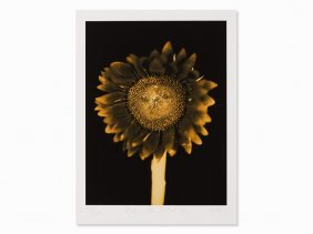Chuck Close (b 1940), Untitled (sunflower), Pigment