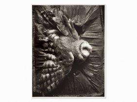 Eberhard Grames (b. 1953), 'barn Owl', Signed, Germany,
