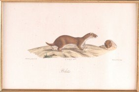 GEORGES CUVIER (1769-1832) LITHOGRAPH 'BELETTE'