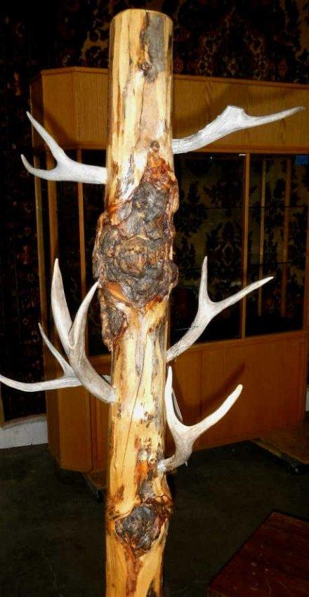 Log And Antler Coat Rack Lot 262