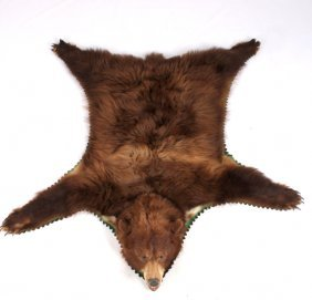 Montana Brown Bear Taxidermy Rug Mount