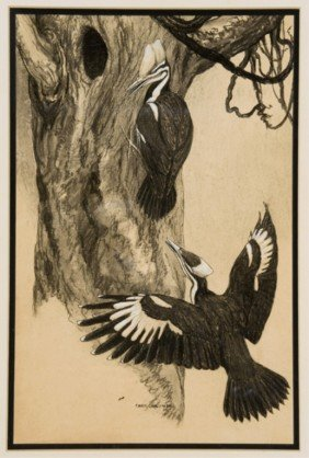 Charles Livingston Bull Drawing Of Woodpeckers.