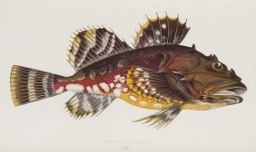 Couch, Jonathan A History Of The Fishes Of The British