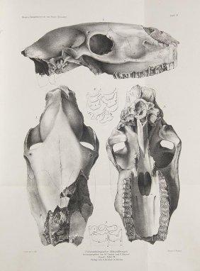 Sammlung Von 5 Paläontologischen Büchern. Mit