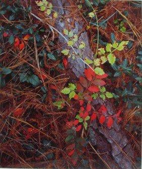 Tom Blagden Cibachrome Forest Floor, Dixie Plantati