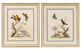 Group Of 2 George Edwards Ornithological Prints