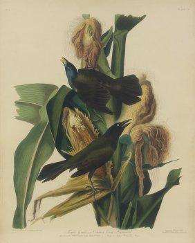 John James Audubon, (american, 1785-1851), Purple