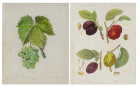 Anonymous , (19th Century), A Pair Of Botanical Prints,