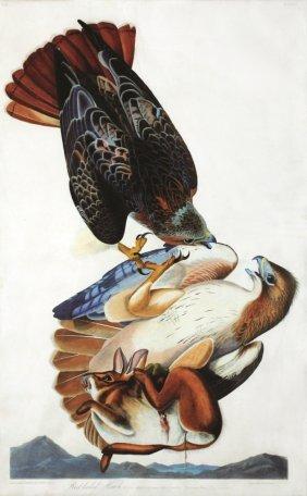 John James Audubon, Plate 51 :
