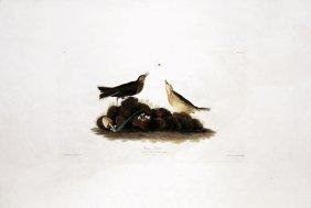 John James Audubon, Plate 10: