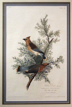 Audubon Aquatint By Havell, Cedar Bird
