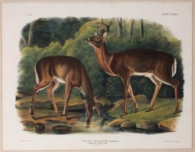 Audubon Lithographs, Imperial Folio, Common Deer
