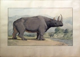 Charles H. Smith, African Rhinoceros Watercolor
