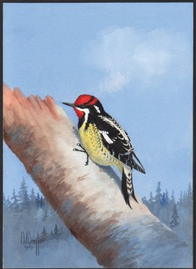 Steffen Watercolor Of Red-naped Sapsucker