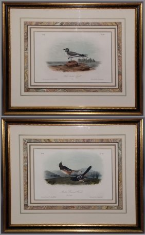 Audubon Octavo Birds Framed Pair