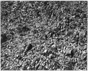 Frederick Sommer, Arizona Landscape