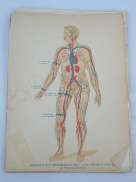 Collection Of Antique 19th C Medical Illustrations