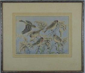 Rex Brasher - Framed Antique Ornithological Print
