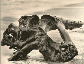 Bullock, Wynn - Driftwood