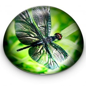 Emerald Dragonfly Paperweight