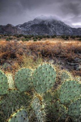 Bob Larson. Cactus Overcast