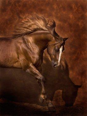 Robert Dawson - Horse Dancer